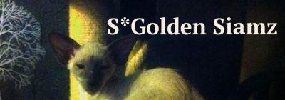 GoldenSiamz